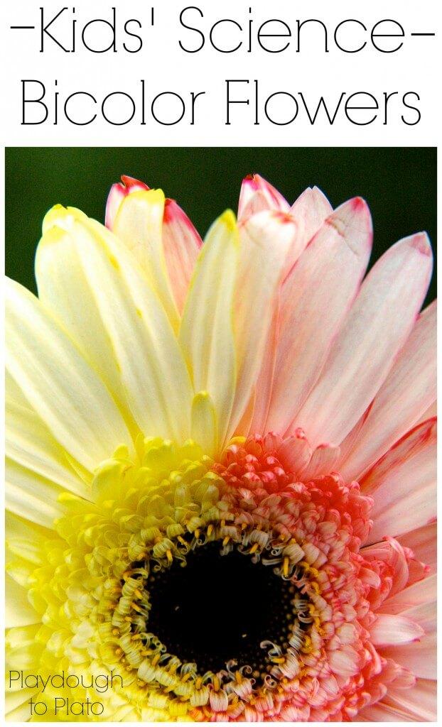 Kids' Science Bicolor Flowers
