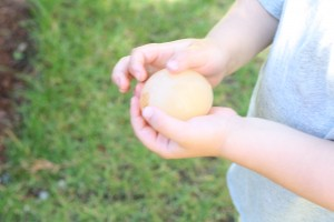Awesome science experiment for kids!! Make rubbery eggs. {Playdough to Plato}