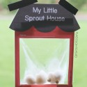 Grow seeds in a homemade little sprout house greenhouse.