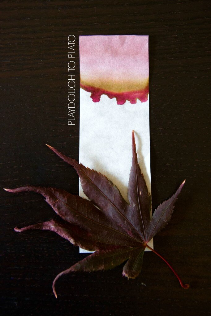 Awesome kids science experiment for fall! See how leaves make their brilliant fall colors.