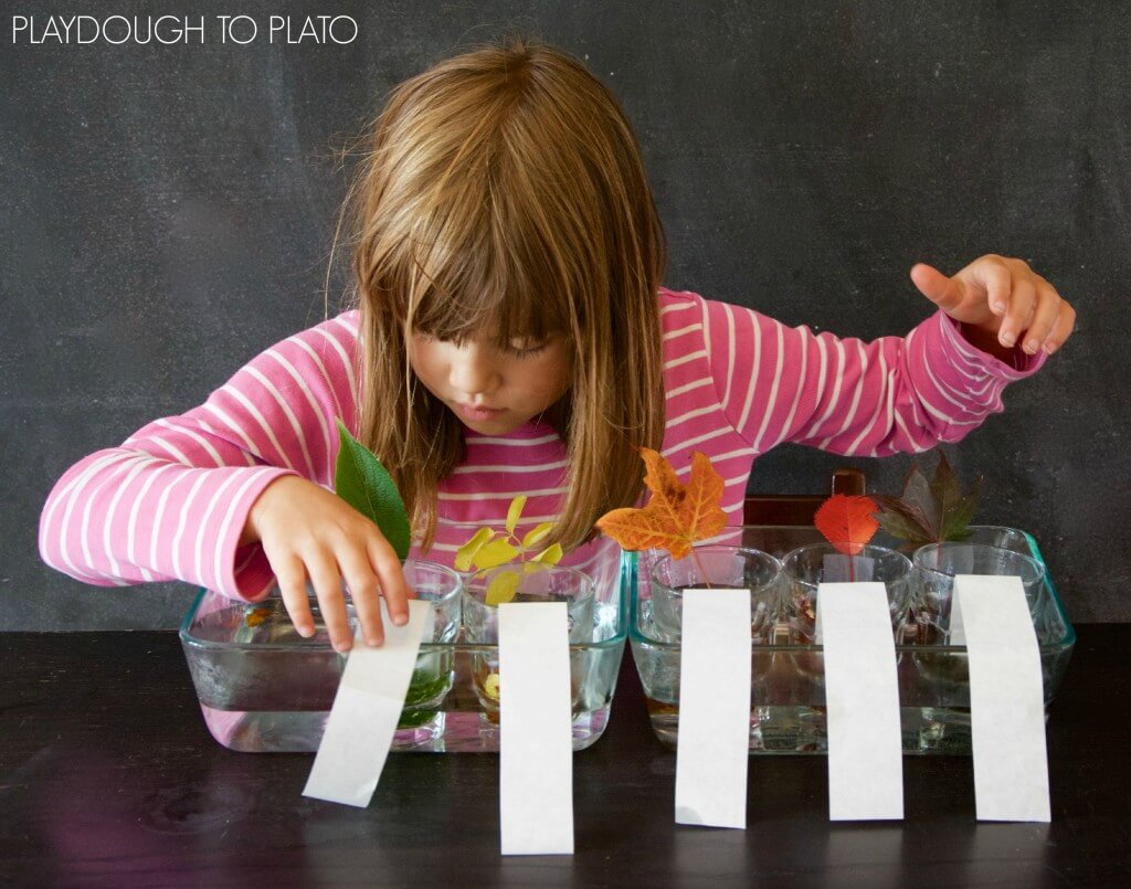 Awesome kids science experiment for fall. Do some simple chromatography and find out how leaves make their colors.