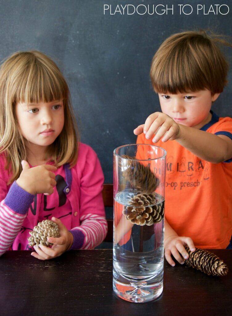 Awesome pine cone science activities for kids!