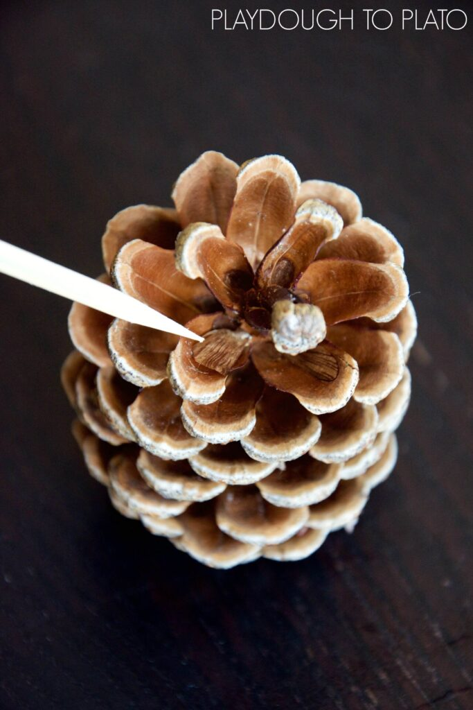 Awesome pine cone science for kids!