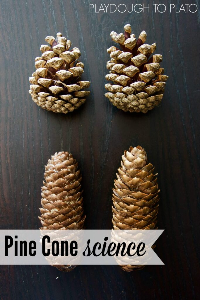 Pine Cone Science for Kids. Cool science activities for fall!