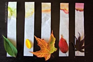 Leaf Chromatography