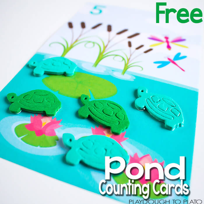 Pond-counting-cards-square