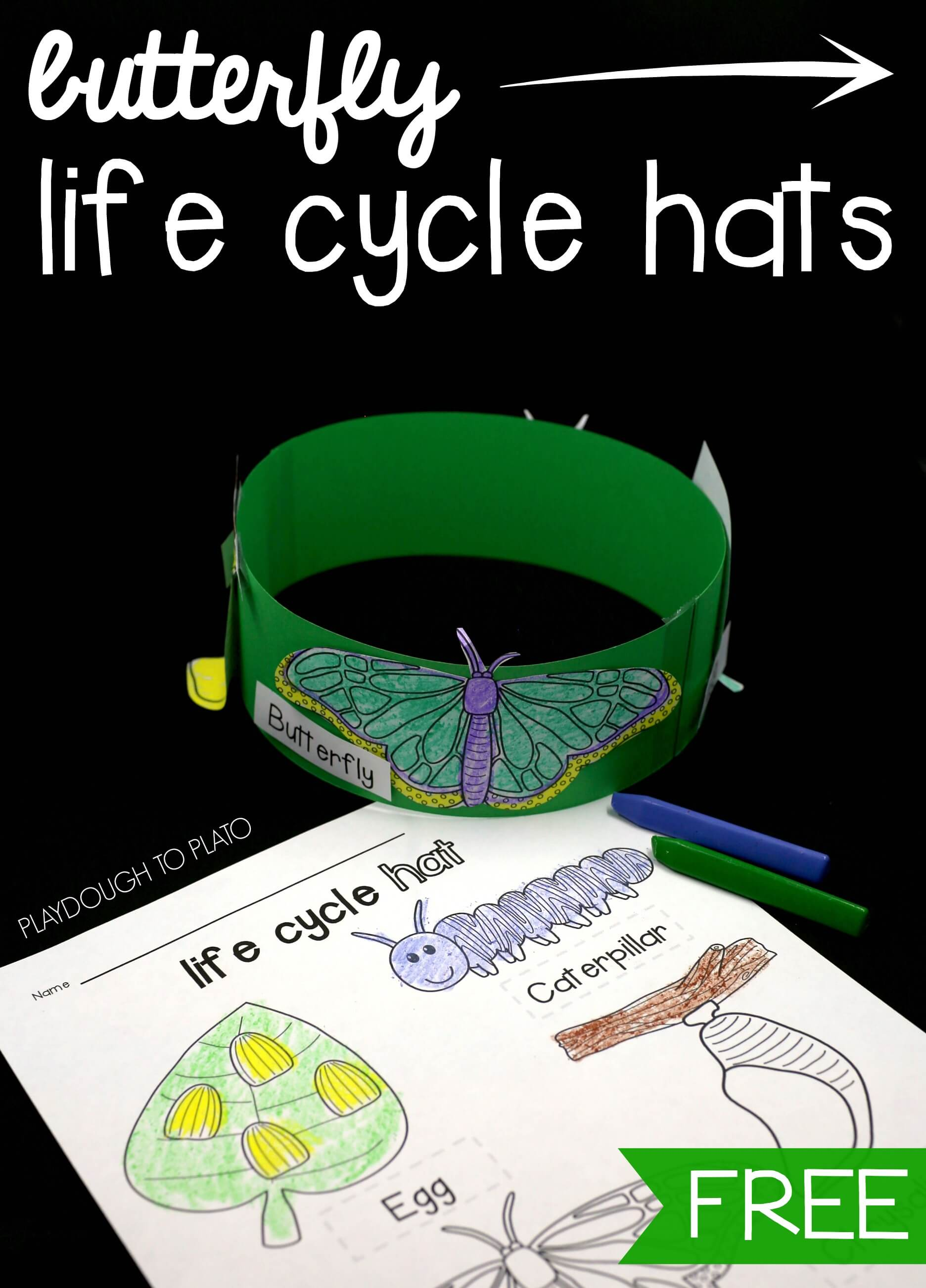 Butterfly Life Cycle Hats Playdough