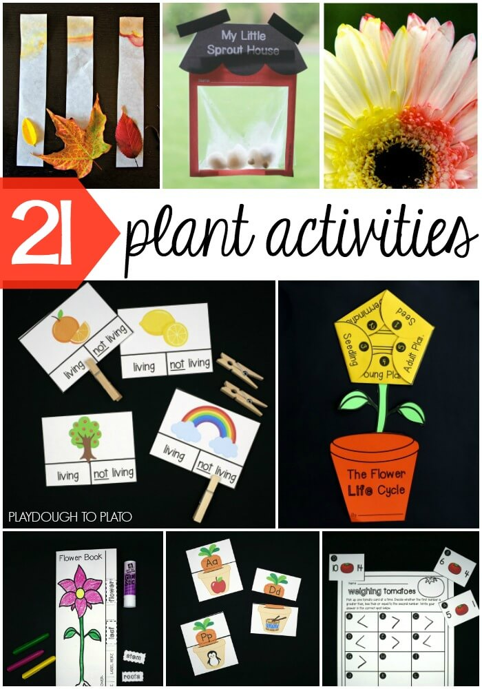11 Plant Life Cycle Activities