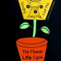 Flower Life Cycle Craftivity. There's a pumpkin version too!
