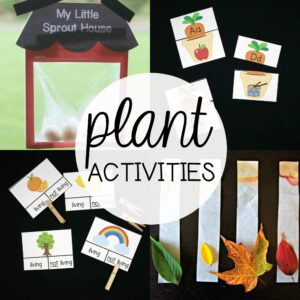 Plant Activities for Kids