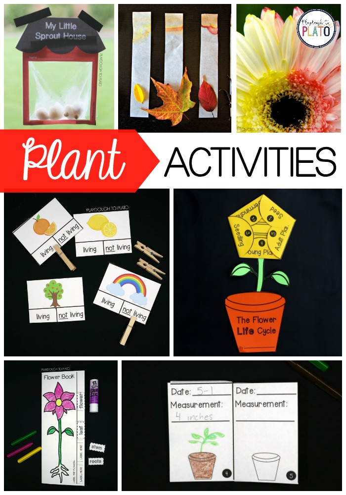 11 Plant Life Cycle Activities - Playdough To Plato