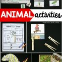 awesome-animal-activities-for-kids