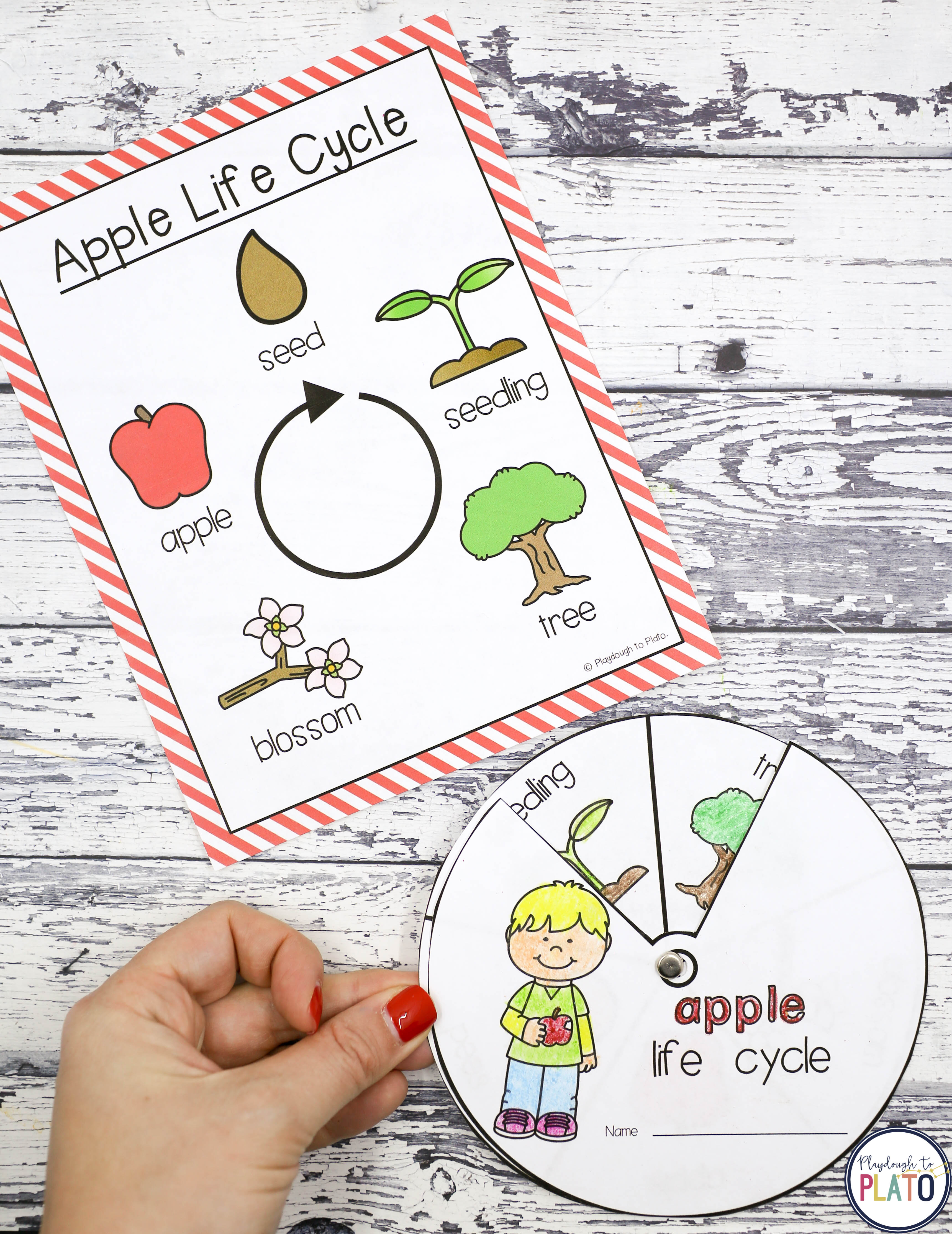 photograph relating to Apple Life Cycle Printable called Apple STEM Issues